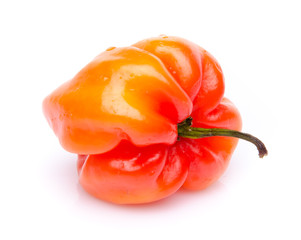 Red habanero pepper