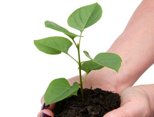Life and growth concept with human hands holding a green small p
