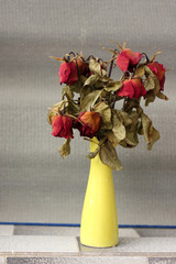 wither rose, died rose in vase
