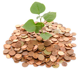 Growth concept with a green small plant planted in coins