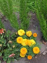 Çiçek-Çiçekler