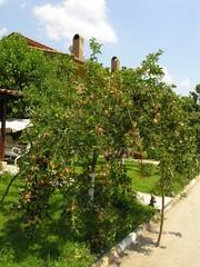 Tatil Köyündeki Ağaç
