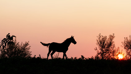 Sunset horse in nature