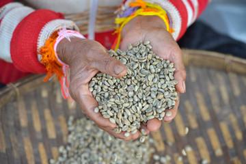 Mujer seleccionando granos de café, Paksong, Laos