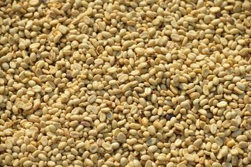 Granos de café secándose al sol, Paksong, Laos
