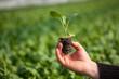 Hand holding seedlings