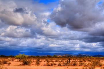 Sonora Desert