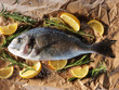 Raw dorado fish with rosemary and sea salt