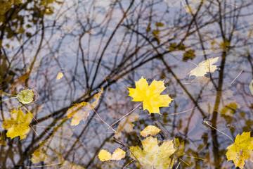 Herbstblatt auf dem Wasser, autumn leaves on water