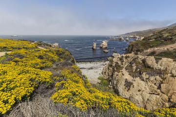 Big Sur Wild Flower Shore