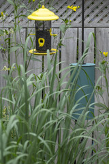 Bird Feeder in a Garden