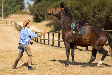 breeder trying to calm down his horse