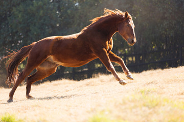 horse running on the field