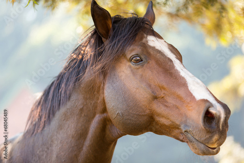 Poster Paarden purebred racing horse