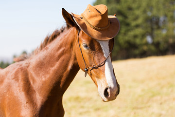 horse wearing a cowboy hat