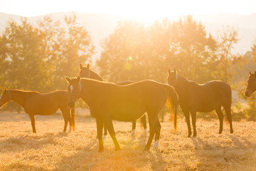 horse herd on ranch