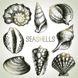 Seashells hand drawn set. Sketch design elements - 68048232
