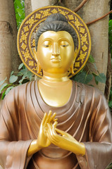 The buddha image under the bodhi