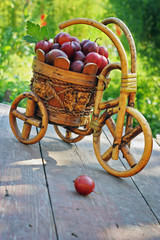 Gooseberry on a bicycle