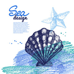 Seashell background. Sea nautical design.