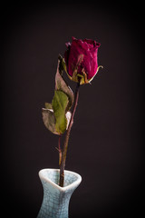 Withered roses in vase on black background
