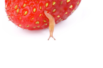 Fruit Snail