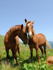 Horse in mountain