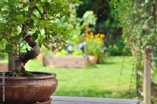 Plexiglas Bonsai bonsaï en pot dans jardin