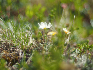 flowers dryads