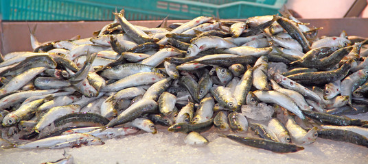 Poissonnerie - Sardines