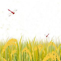 稲穂 秋 収穫 米
