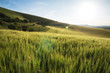 Beautiful landscape wheat field in bright Summer sunlight evenin - 68059490