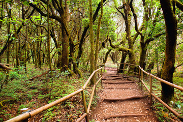 the amazing rain-forest in La Gomera, Parque Nacional de Garajon