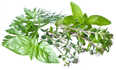 Green fresh herbs on a white.