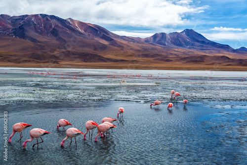 Foto op Aluminium Flamingo Pink Flamingoes in Bolivia