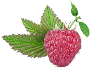 One rich raspberry fruit with leaves isolated on a white.