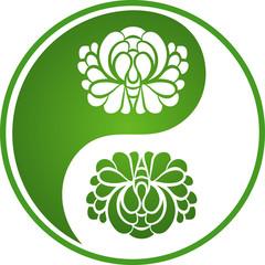 Chrysanthemum Yin Yang