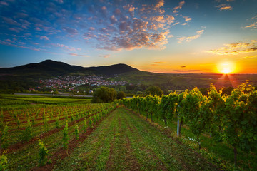 Vineyard with colorful sunrise in Pfalz, Germany