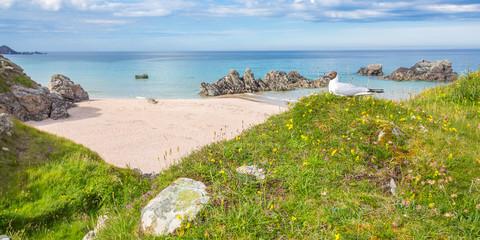 Seagull at Sango Beach, Durness, Scotland