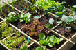 Leinwanddruck Bild - Vegetable garden