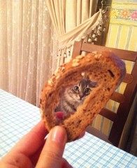 cat looking behind the bread