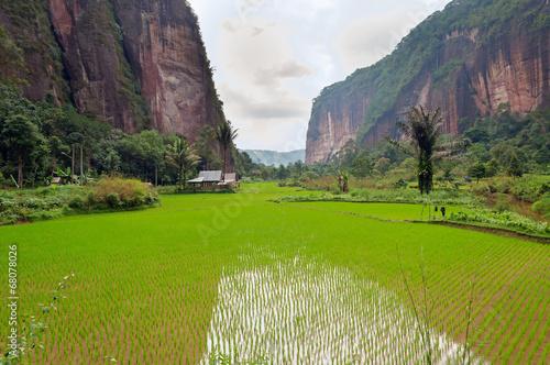 Foto op Canvas Indonesië Harau Valley