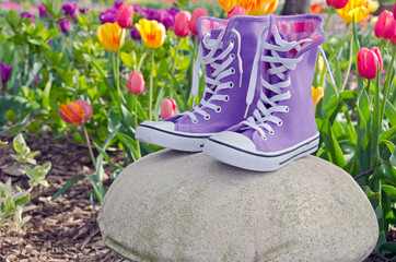 purple sneaker in tulip garden