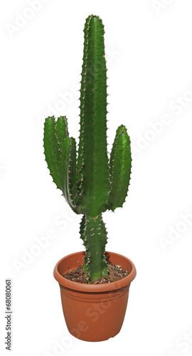 Fotobehang Cactus Euphorbe arborescente