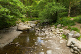 Scenery from walk to Aira Force waterfall Ullswater