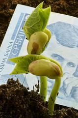 Cрпски динар  Srpski dinar Serbian Сербский динар money