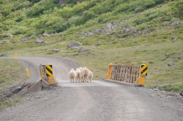 cul de mouton