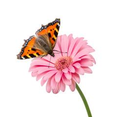 butterlfy flower