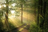 Dirt road through deciduous forest at dawn