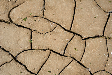 Cracked clay ground with small green leafs